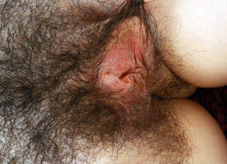 Peludo pussys close up descarga gratuita.